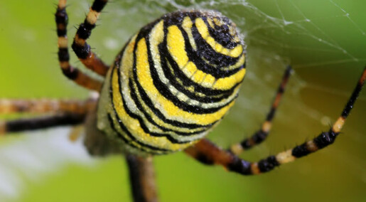 How spiders weave their webs