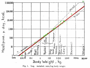 Kleiber's original model from 1932, showing body size versus metabolic rate for a variety of species. (Photo: Physiological Reviews)