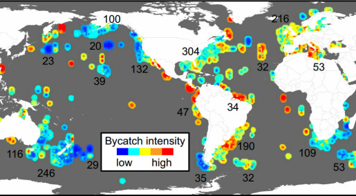 Map outlines global hotpots of bycatch intensity
