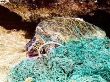 Millions of animals die every year as a result of fishery bycatch. Now scientists have created a global overview of the problem. (Photo: Wikipedia/Cory)