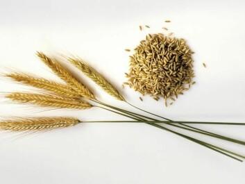 Rye (Photo: Maximilian Stock Ltd, Bon Appetit)