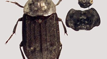 Ancient insects reveal Danish climate secret