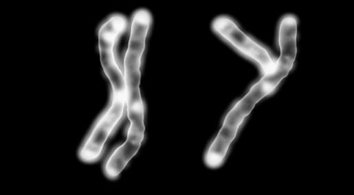 Chromosome Y loss explains men's shorter longevity