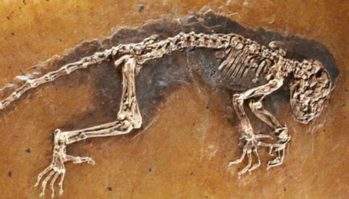 The fossil Ida – five years on