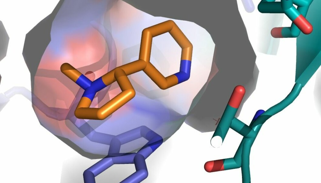 An example of the 3D receptor model. The orange shape is nicotine, which is attached to the newly discovered binding site. (Graphic: Thomas Balle)