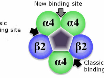 The new binding site was located at the interface between two Alfa4 units. (Graphic: Kasper Harpsøe, the Pharmaceutical Faculty, University of Copenhagen)