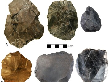 The difference between bifacial technology and Levalloisian technology. The stone tools in the top row were made using bifacial technology, whereas those on the bottom row were the product of the Levalloisian technique.
