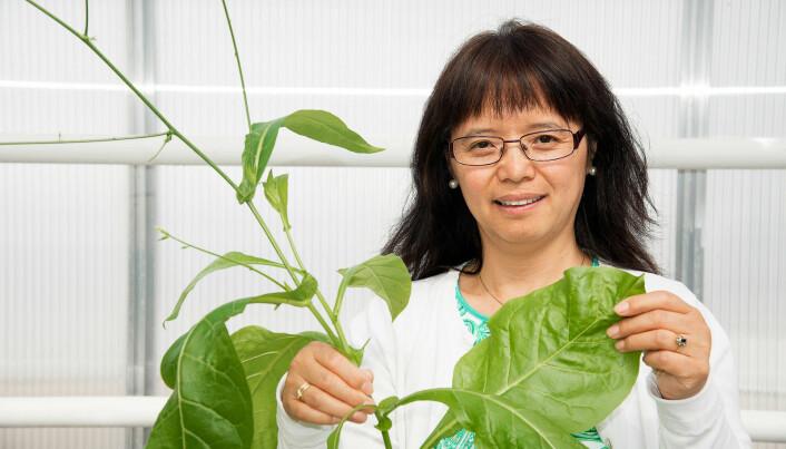 Plant based vaccines are medicine of the future