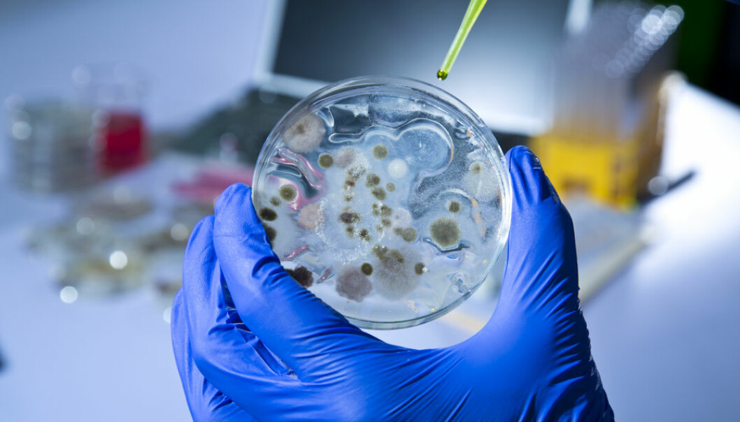 Danish scientists have unlocked a bacteria mystery.