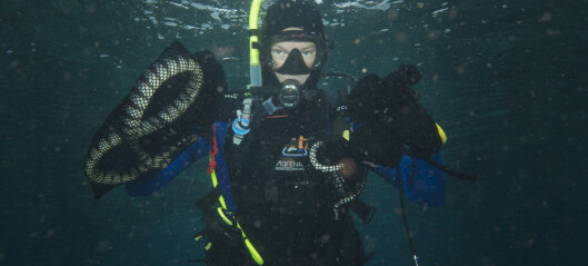 Danish biologist catches sea snakes with his bare hands