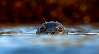 Spying on seals with videocams and sensors