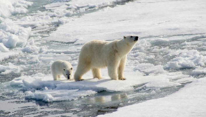 Arctic bacteria converts mercury