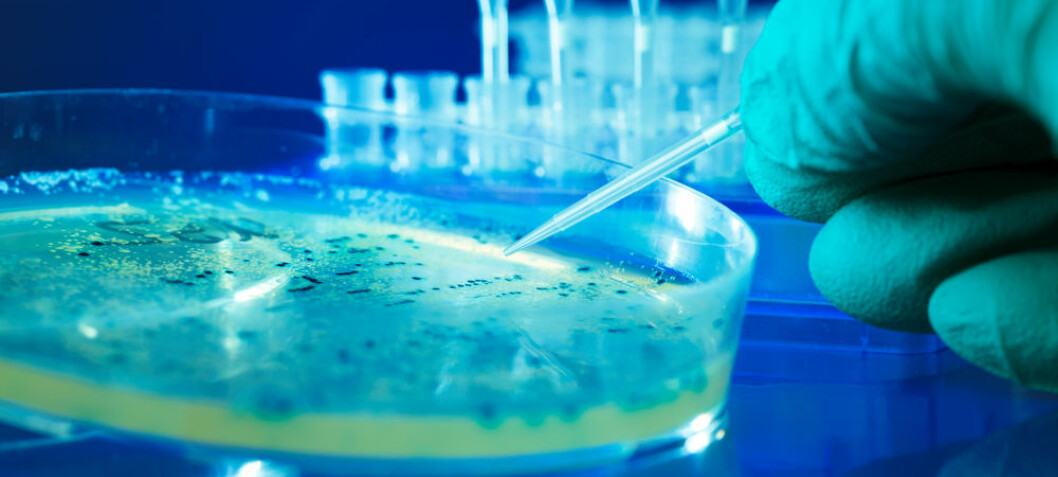 Lumpy bacteria cause life-threatening infections