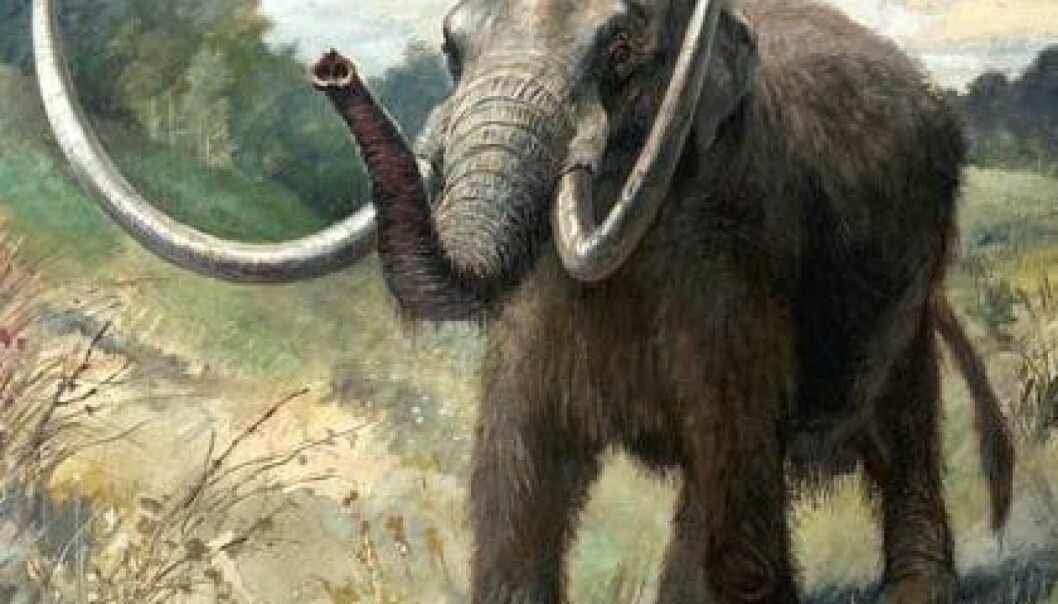 Some scientists are convinced the mammoth became extinct after a comet impact caused extreme changes in the weather on Earth. A new study questions this theory. (Illustration: Charles R. Knight)
