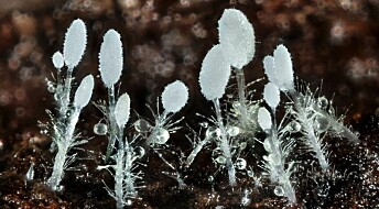 New fungus species discovered in Scandinavia