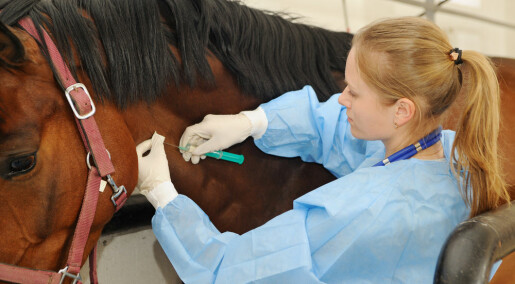 A virus from horses is bringing us closer to a vaccine against Hepatitis C