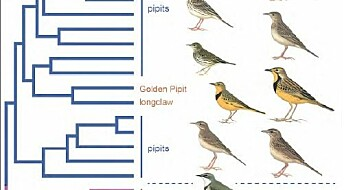 Two birds have cheated scientist for decades