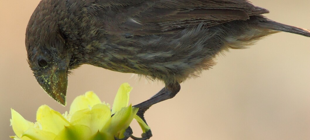 Birds on the Galápagos Islands have developed new eating habits
