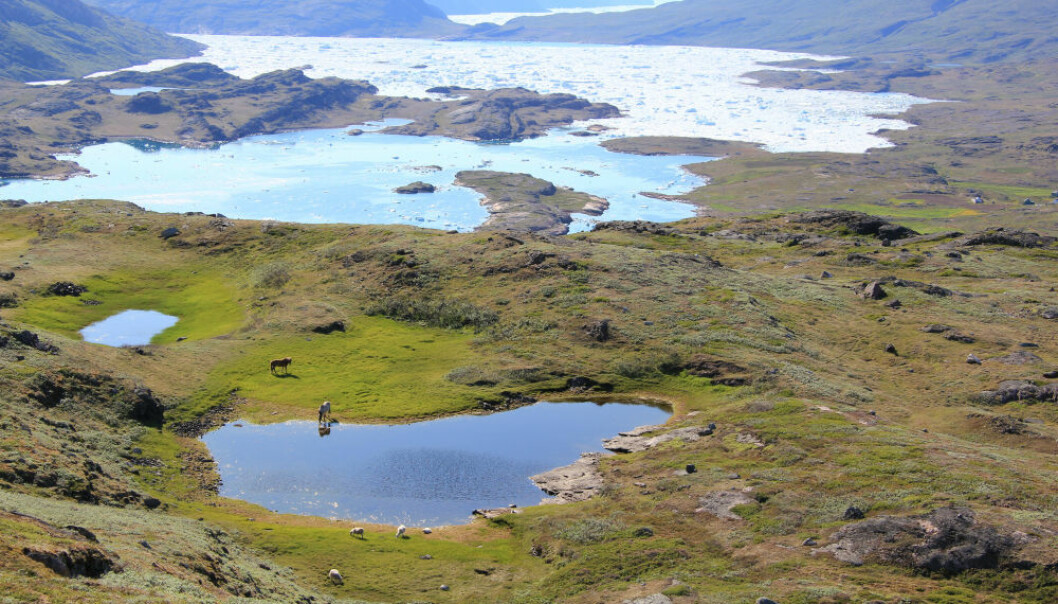 New study puts down the myth that climate change killed off the thick-skinned Norsemen in Greenland. (Photo: C. K. Madsen)