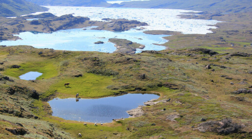 Greenland Vikings outlived climate change for centuries