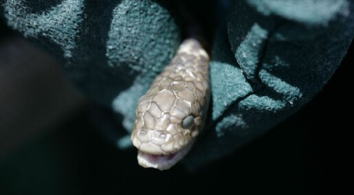 Scientists rediscover extinct sea snakes