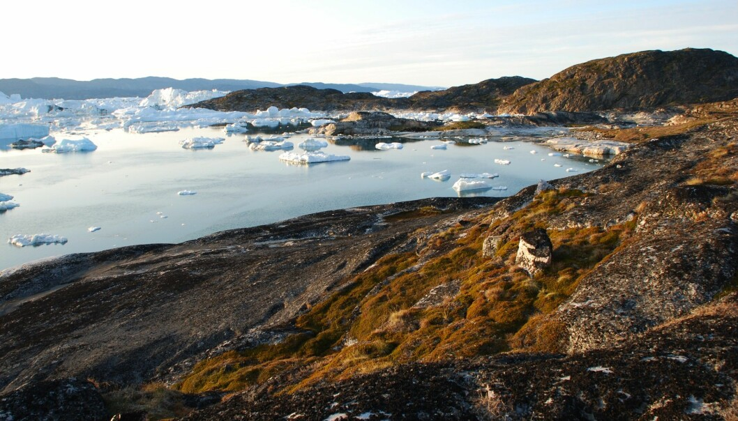 The settlement Qajaa at Ilulissat Ice Fjord in West Greenland. Over the past 3500 years this has been home to the three main Greenlandic cultures, attracted by the bountiful fishing opportunities at this boundary between water and ice. They have all used area to dispose of their tools of wood, bone, and even skin, forming an ancient rubbish dump known as a kitchen midden. These deposits have been preserved ever since in the permafrost of West Greenland. (Photo: Bo Elberling)