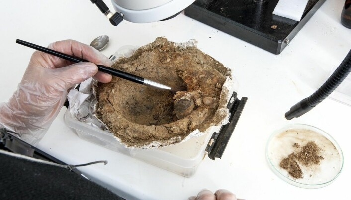 The mystery of a deeply gouged Viking shield