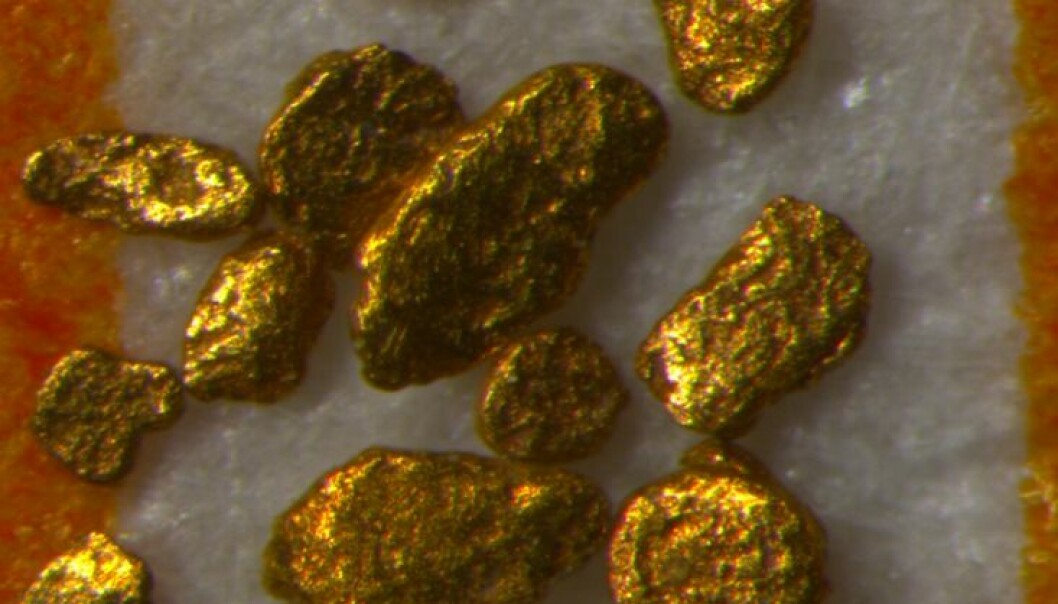 These tiny lumps of gold were brought to Denmark from further north in Scandinavia during one of the most recent ice ages. (Photo: Christian Knudsen)