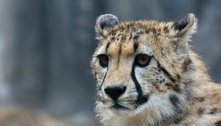 Can wild animals have mental illnesses?