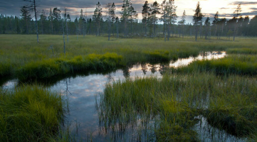 Fight on to preserve Elfdalian, Sweden's lost forest language