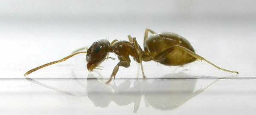 Ants care for their sick to avoid epidemics