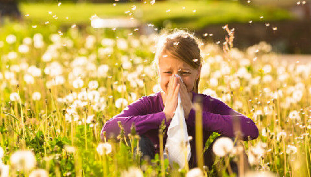 Allergies develop when the immune system mistakenly perceives harmless substances as invaders and starts a chain reaction to defend themselves. (Photo: Colourbox)