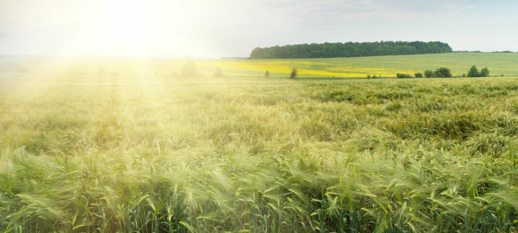 A new GMO technique that organic farmers will love