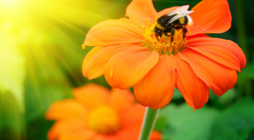 Conserving rare bees has ethical merit but little economic value