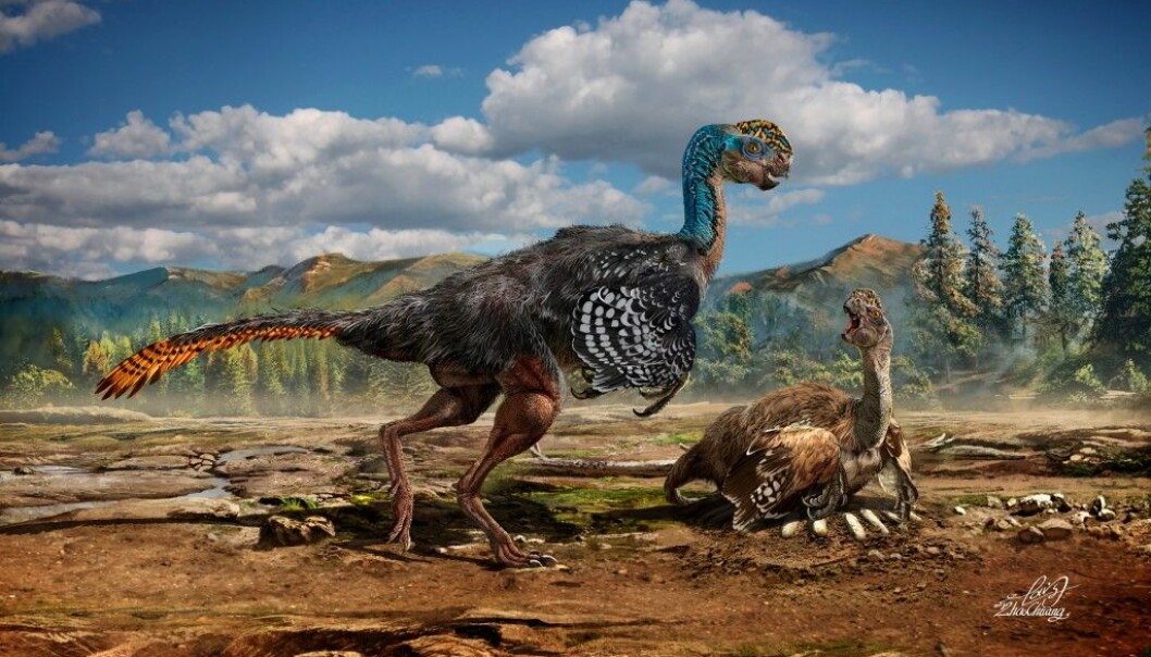 An artists impression of how the new dinosaur species may have appeared, with feathers and an unusually shaped skull. (Photo: Chuang Zhao)
