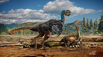 New feathered dinosaur species found in China