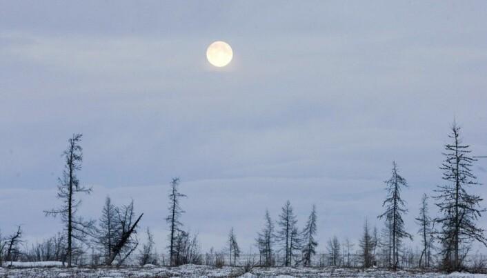 Tundra shrubs can speed warming