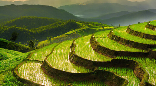 A new type of rice produces more food and cuts methane emissions