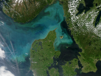 "A phytoplankton bloom off the Danish coast – these tiny marine organisms form the base of the marine food chain, but scientists do not know for sure how changing ocean conditions affect this vital food source for marine wildlife. (Photo: <a href=""https://www.flickr.com/photos/gsfc/4691434870 "" target=""_blank"">Flickr NASA Goddard Space Flight Center, creative commons licence</a>)"