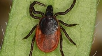 New type of infection by ticks leaves no visible symptoms