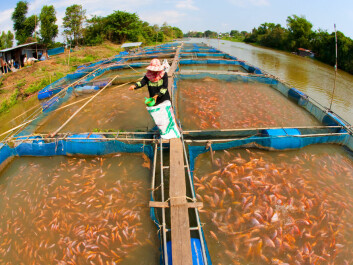 "A fish farm on the banks of a Thai river. Aquaculture may be part of the solution to secure supplies for future fisheries, but questions remain on how best to regulate and manage them, according to the Nereus report. (Photo: <a href=""http://www.shutterstock.com/da/pic-69539743"" target=""_blank"">Shutterstock</a>)"
