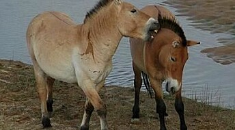 Wild horses could soon return to Europe