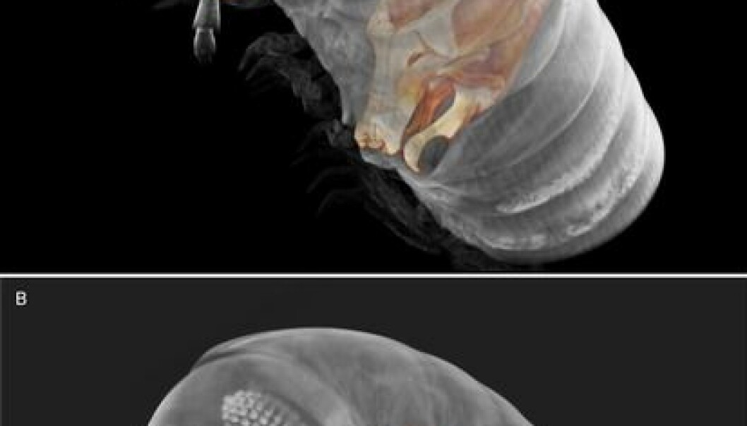 3D cybertypes of the newly discovered millipede species, Ommatoiulus avatar. (Akkari et al. 2015, doi: 10.1371/journal.pone.0135243)