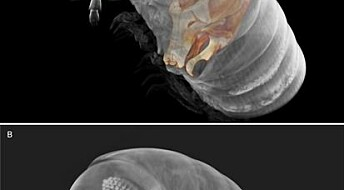 Scientists create first cybertype of Avatar millipede species