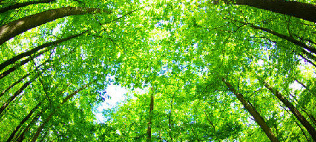 There are now 3.04 trillion trees on earth