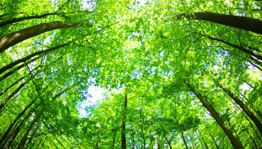 "A new study has calculated the total number of trees on the planet: 3.04 trillion. But they also estimate that it's falling quickly. (Photo: <a href=""https://www.colourbox.com/image/green-forest-image-4630197"" target=""_blank"">Colourbox</a>)"