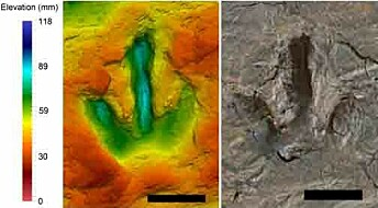 What 142 million year old footprints reveal about dinosaur behaviour