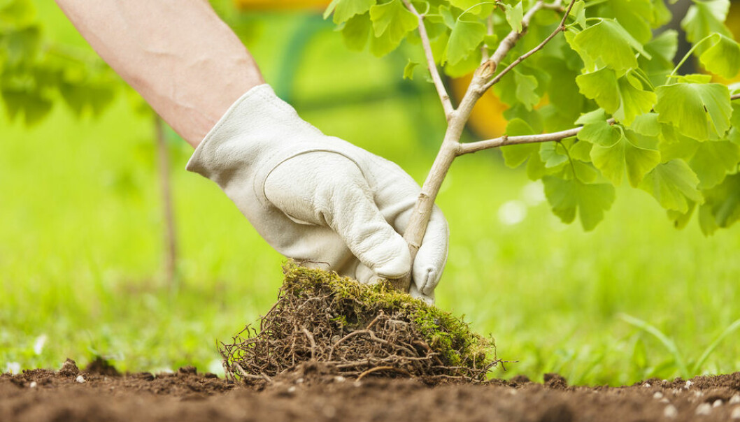 "A new study shows that bacteria, worms, beetles and other underground organisms are just as important as life above ground when it comes to the overall health of ecosystems (Photo: <a href=""http://www.shutterstock.com/da/pic-295997087/stock-photo-hand-with-glove-planting-small-tree-with-roots-in-a-garden-on-green-background.html"" target=""_blank"">Shutterstock</a>)"