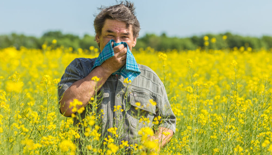 Allergies such as hay fever occur when the immune system 'overreacts' to pollen. (Photo: Shutterstock)