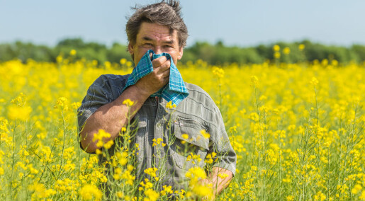No link between allergies and deadly diseases